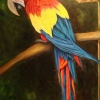 Guacamaya l, oil, private collection