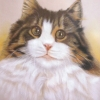 Cat, pastel. Private collection
