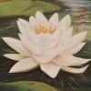 Lotus lll