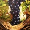 Delicious Grapes